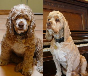 DIY Dog Grooming Like Pro Groomers