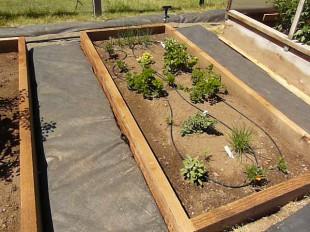 instalação de irrigação de gotejamento jardim vegetal