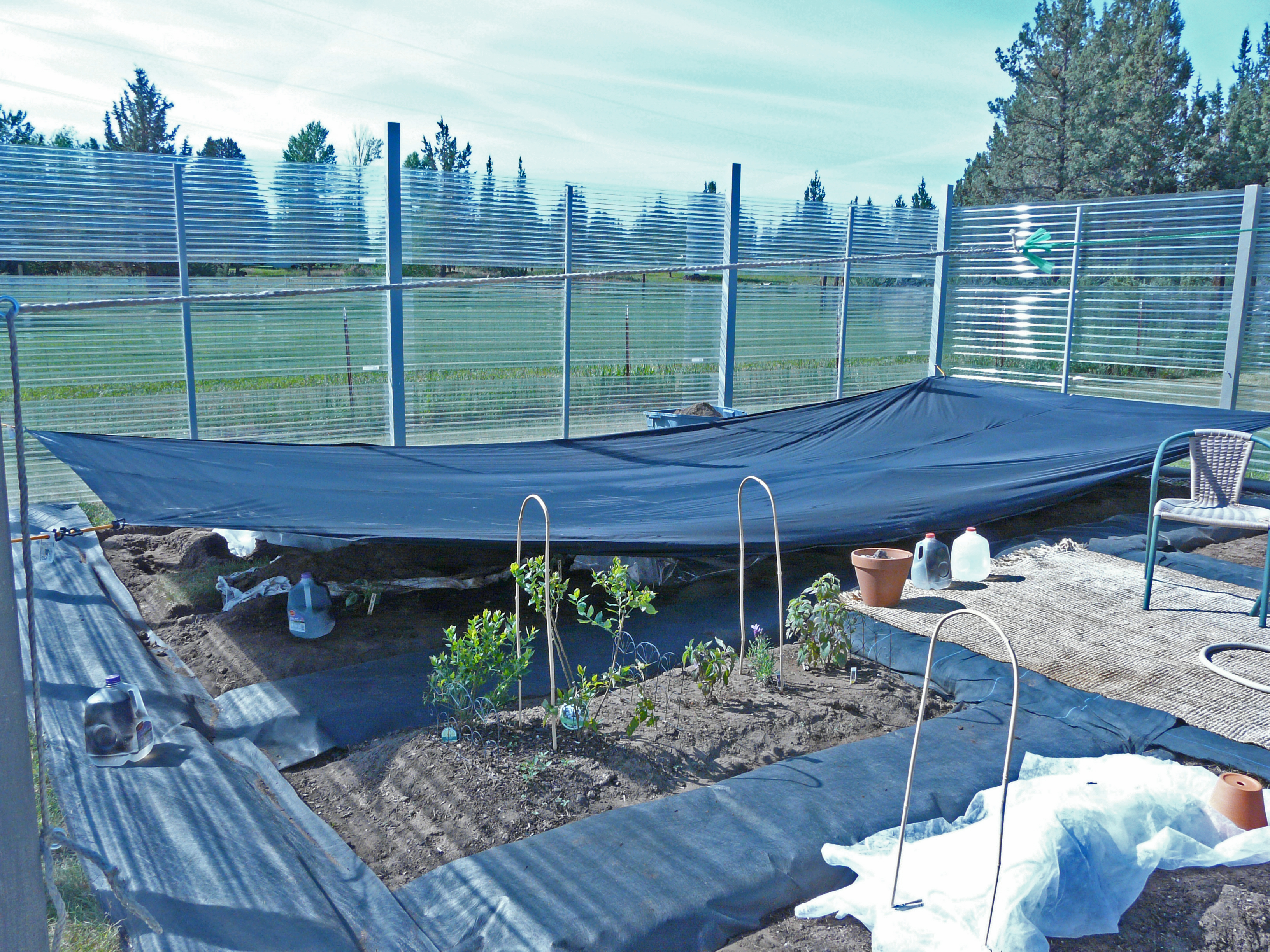 Cold Zone Gardening: Frost Protection